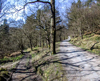 The Road Through The Crags (February)