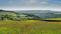 View from Upper Crimsworth - June
