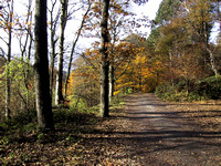 Autumn in Hardcastle Crags (October)
